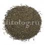 Ортосифон тычиночный, почечный чай (трава)