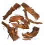 Красный корень (копеечник чайный)