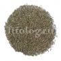 Розмарин (трава)